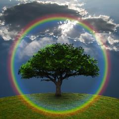 Green Tree Rainbow