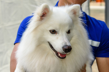 White cheerful dog with long hair and open mouth