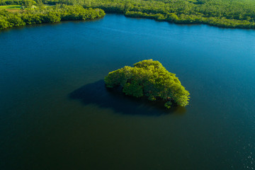 Island of mangrove trees