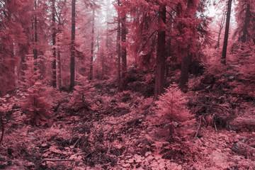 Papiers peints Grenat Champ, prairie, pâturage et forêt embrumés en infrarouge, rose.