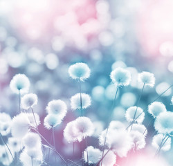 Gentle landscape with blooming arctic cotton grass
