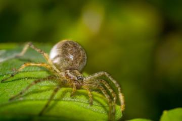 spider on leaf macro photo