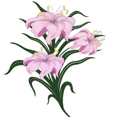 A bouquet of pink lilies on a white background.