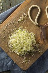 Raw Green Organic Alfalfa Sprouts