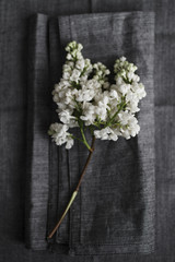 White lilac flower