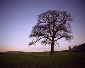 Star Trails, Shropshire