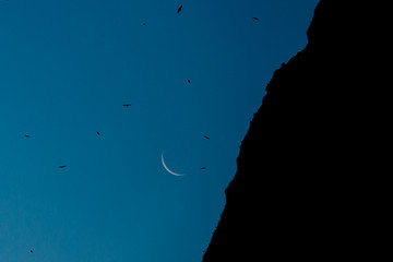 Mountain, moon, and birds at night