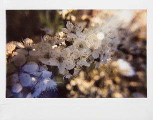 Spring branch instant photograph