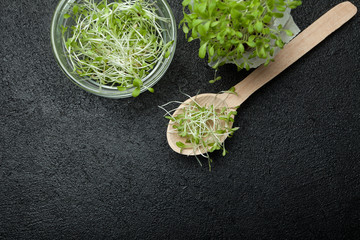 Organic fresh micro greens are rich in antioxidants and vitamins on a black background, empty space for text.