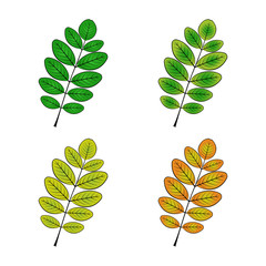 color variations vector illustration of the acacia sheet