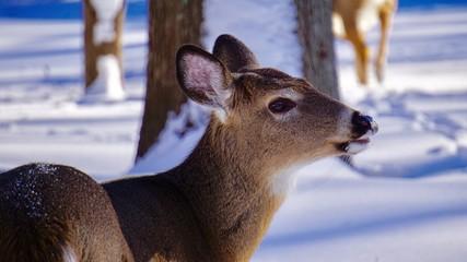 deer outside in the snow 2