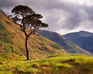 Lone Pine, Glen Nevis, Scottish Highlands