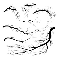 A set of drawn tree branches. Vector illustration on white background.