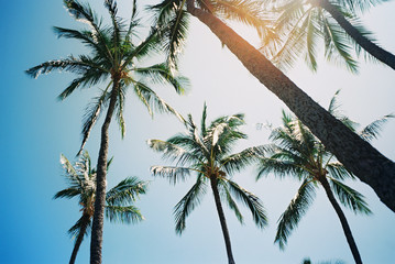 palm trees in the sunshine