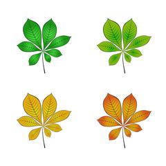 color variations of chestnut leaf vector illustration