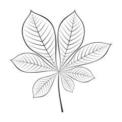 black and white vector illustration of chestnut leaf