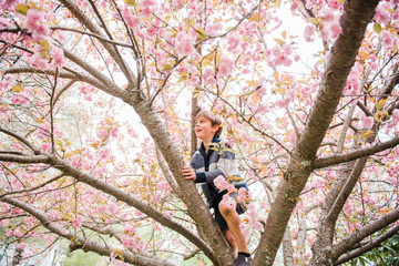 little boy climbing a tree with pink blossoms