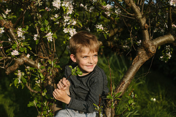 Portrait of happy boy sitting in a blossom tree.