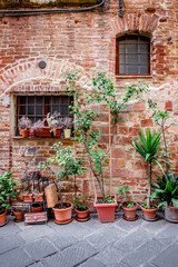 Potted Plants in an Old Tuscan Town