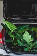 Ornamental plants in the car