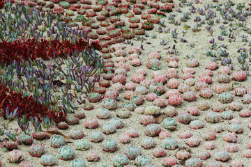 Succulents planted in a patterned display at the Dublin Botanical Garden