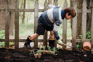 little boy preparing vegetable patch