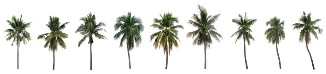 Collection nine Palm coconut on white background