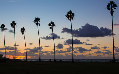 Palm trees silhouettes on tropical island beach at summer sunset  with vivid colorful sky in background