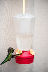 A hummingbird and feeder