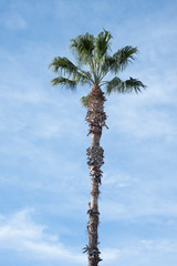 Palm tree with perched bird
