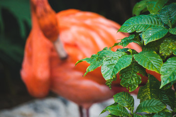 Green leaves with an out of focus flamingo in the background