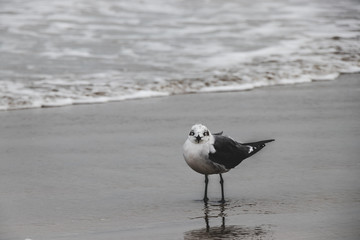 Seagull by the Ocean