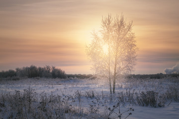 Spoed Foto op Canvas Lavendel frosty winter evening in the meadow
