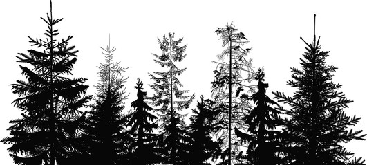 fir trees black group isolated on white