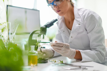 Biologist in the laboratory
