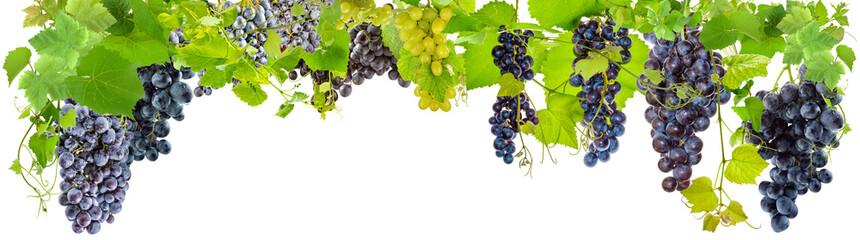 Wall Mural - banderole de grappes de raisins, fond blanc