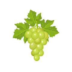 Fresh bunch of grapes isolated on white background. Vector illustration. Decoration for greeting cards, menu. Healthy food design.