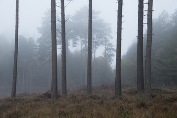 A misty morning at Knightwood Inclosure in the New Forest National Park.