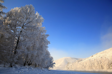 Winter landscape with snow trees.