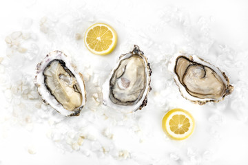 Overhead photo of three oysters with lemons and copy space