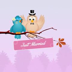 Wedding of birds