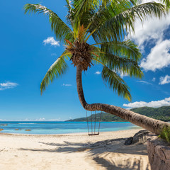 Fototapete - Palm tree on tropical beach in Seychelles, Mahe island.