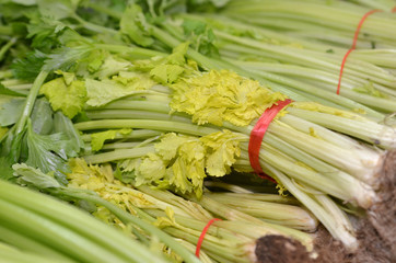 Bunch of Chinese celery