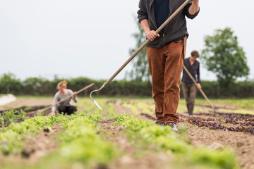 Cropped view of farmer hoeing vegetable garden