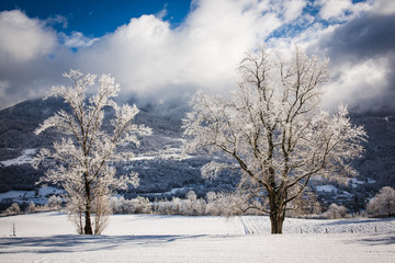 Landscape of Trees covored of snow in winter