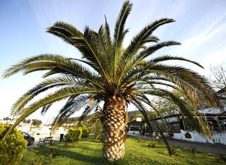 Palm tree on sunny day