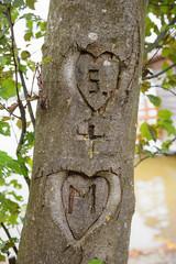 Zwei Herzen mit Initialen, in den Baumstamm geritzt