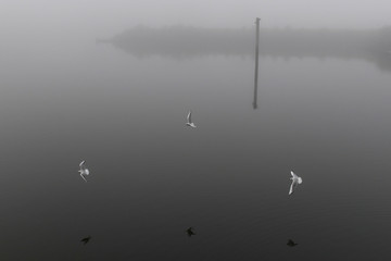 Seabirds fly through heavy fog at the Titanic docks in Belfast
