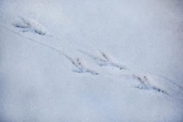 Bird's trace on snow