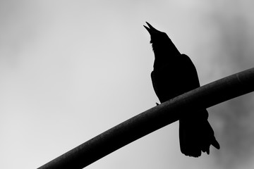black and white silhouette of crow high angle view